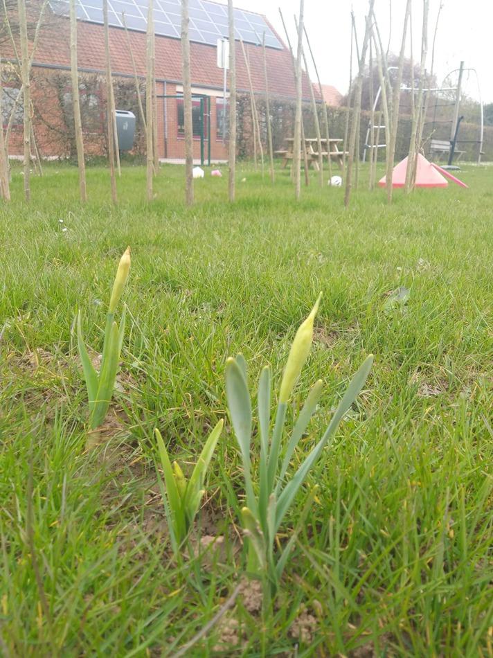 Des nouvelles de la plaine et du potager 😃 C'est le PRINTEMPS 🌱😍 les NARCISSES sont en train de fleurir, les CROCUS sont fleuris et les MUSCARIS aussi! Tout ce que les enfants ont planté cet hiver poussent! Quel bonheur😉 heureusement pour ces petits jardiniers en herbe, le printemps prochain, la nature fera à nouveau son retour ...