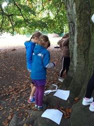 Découverte des arbres dans notre environnement proche avec lecture d'une clé d'identification